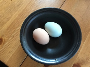 Young-Chicken-Eggs
