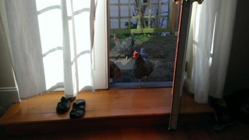 chickeninvasion3