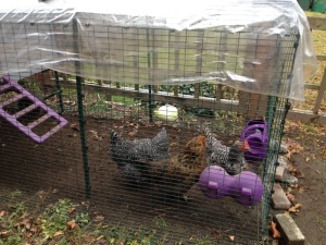 ChickenPresent