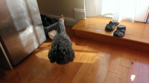 Party-Chicken-House-4