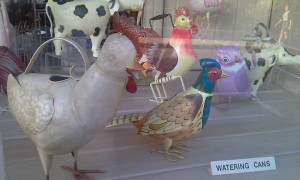 Rockport_Chicken_Watering_Cans