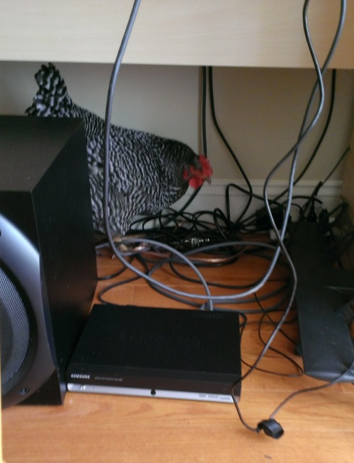 speakerchicken2